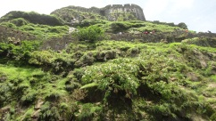 The greenery in and around the Fort