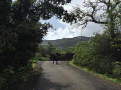 The Tar Road