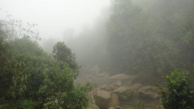 Fog ...fog ..fog