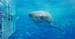sharkcage2