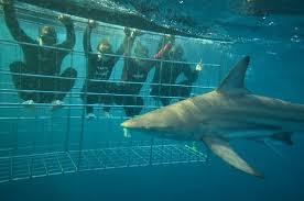 sharkcage3